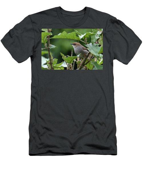 Hunter's Cisticola Men's T-Shirt (Athletic Fit)