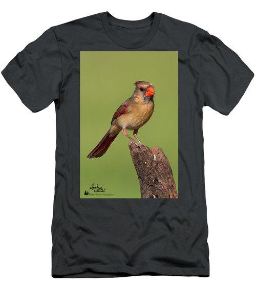 Lady Cardinal Men's T-Shirt (Athletic Fit)