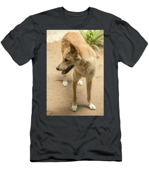 Large Australian Dingo Outside Men's T-Shirt (Athletic Fit)