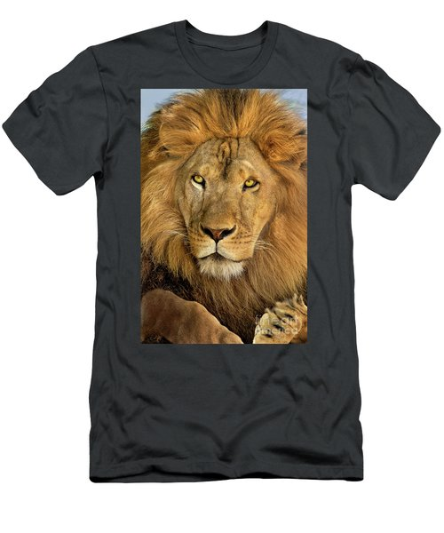 Male African Lion Portrait Wildlife Rescue Men's T-Shirt (Athletic Fit)