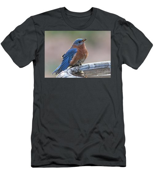 Male Eastern Blue Bird Men's T-Shirt (Athletic Fit)