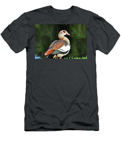 Male Egyptian Goose Men's T-Shirt (Athletic Fit)