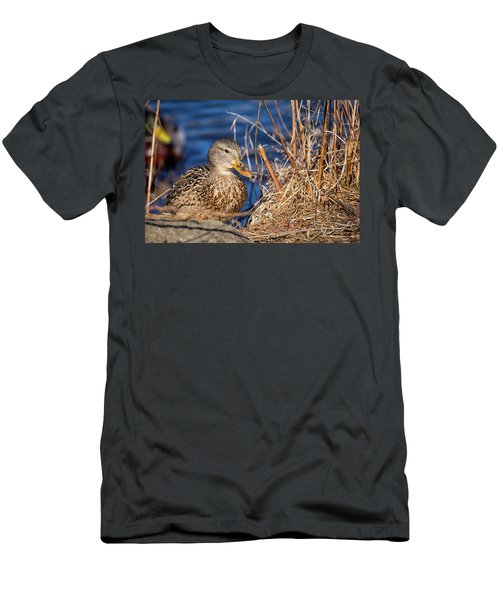 Mallard In The Park Men's T-Shirt (Athletic Fit)