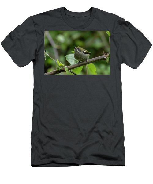 Moustached Tinkerbird Men's T-Shirt (Athletic Fit)