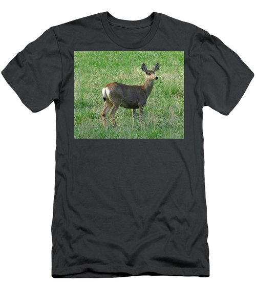Mule Deer Doe Men's T-Shirt (Athletic Fit)