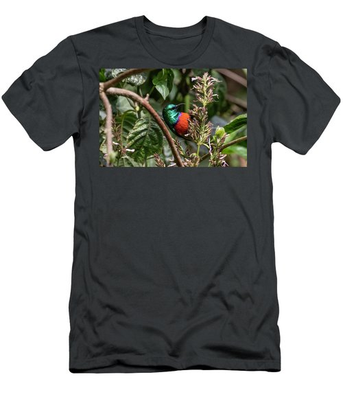 Northern Double-collared Sunbird Men's T-Shirt (Athletic Fit)