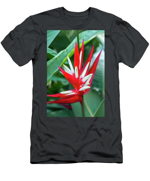 Red And White Birds Of Paradise Men's T-Shirt (Athletic Fit)
