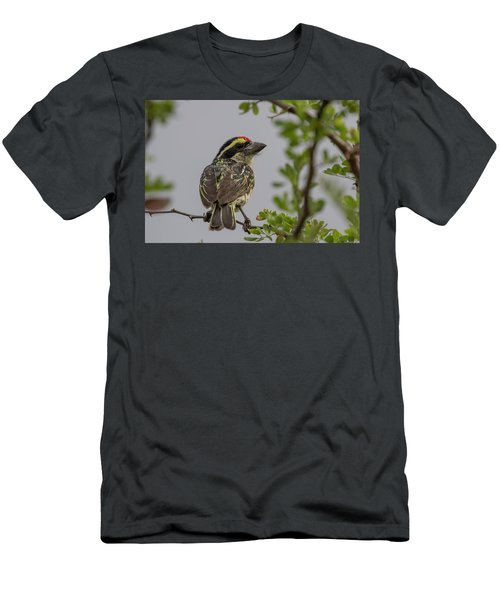 Red-fronted Barbet Men's T-Shirt (Athletic Fit)