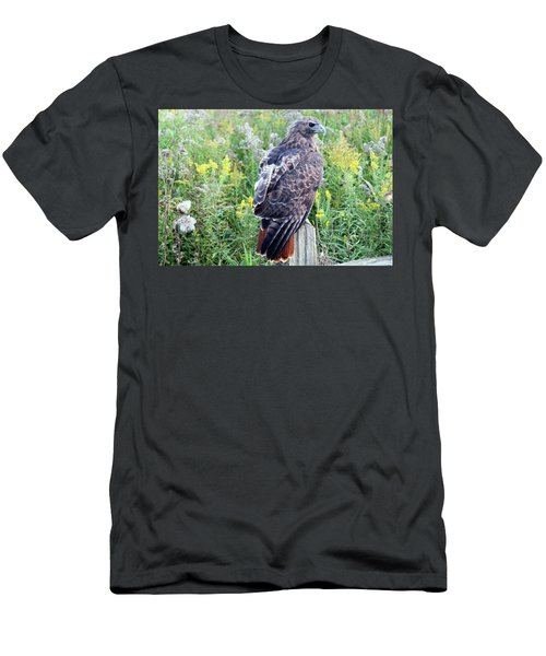 Red-tailed Hawk On Fence Post Men's T-Shirt (Athletic Fit)