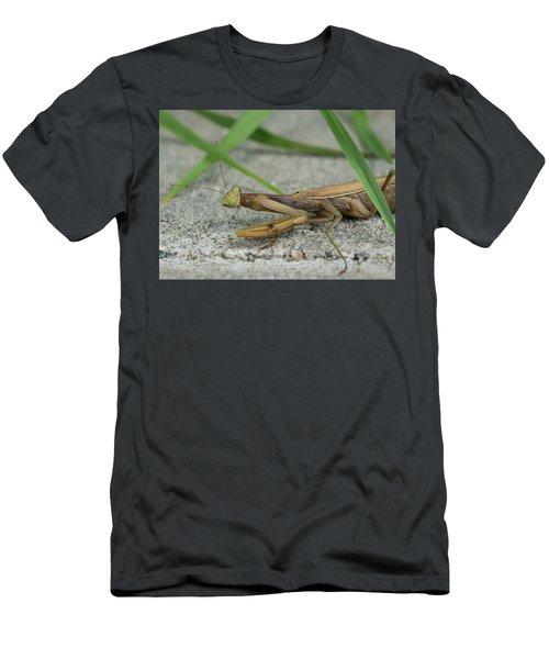 Resting Mantis Men's T-Shirt (Athletic Fit)