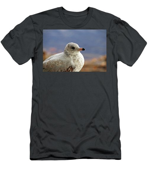 Ring Billed Gull Men's T-Shirt (Athletic Fit)