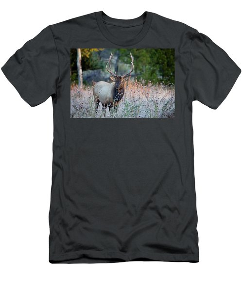 Rocky Mountain Wildlife Bull Elk Sunrise Men's T-Shirt (Athletic Fit)