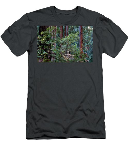 Samuel Taylor Redwoods 2 Men's T-Shirt (Athletic Fit)