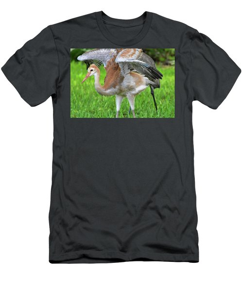 Sandy Crane Shows New Feathers Men's T-Shirt (Athletic Fit)