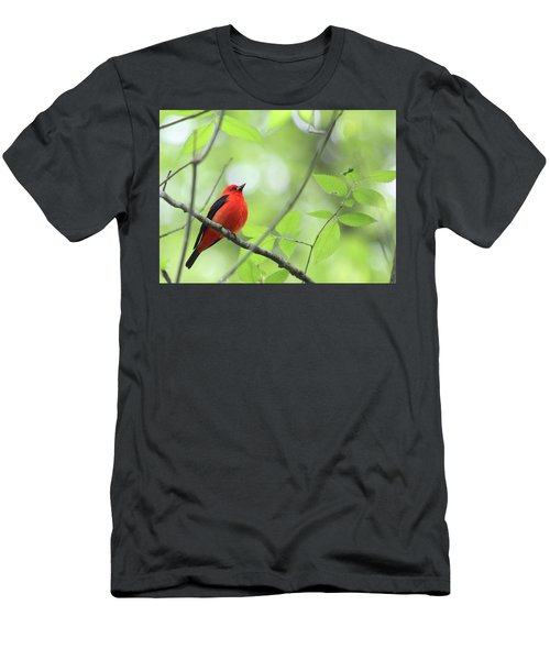 Scarlet Tanager Men's T-Shirt (Athletic Fit)
