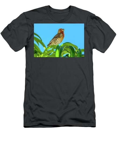 Singing House Finch Men's T-Shirt (Athletic Fit)