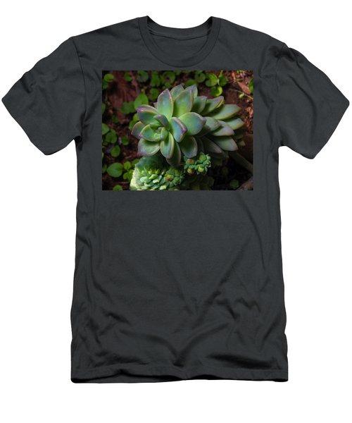 Small Succulents Men's T-Shirt (Athletic Fit)