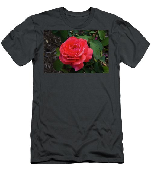 Solitary Rose Men's T-Shirt (Athletic Fit)