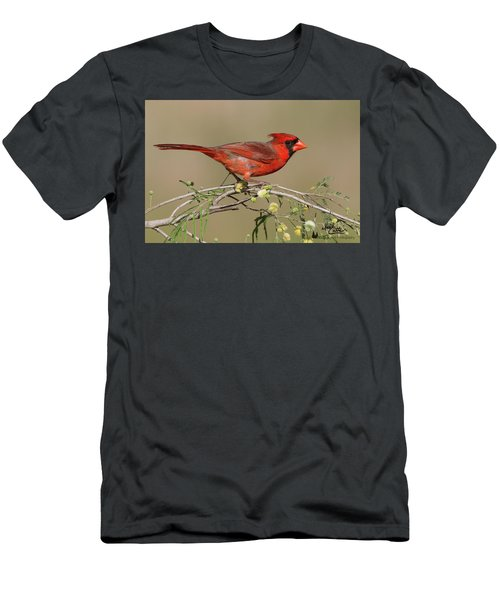 South Texas Cardinal Men's T-Shirt (Athletic Fit)
