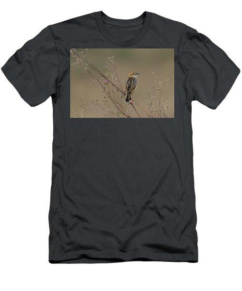 Stout Cisticola Men's T-Shirt (Athletic Fit)