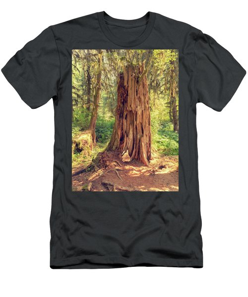 Stump In The Rainforest Men's T-Shirt (Athletic Fit)