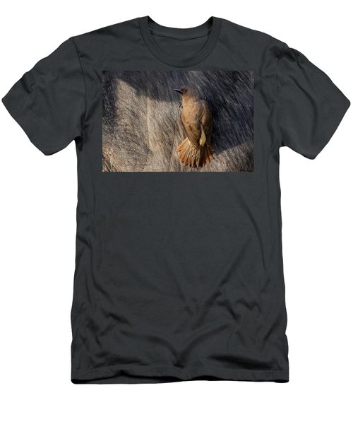 Sub-adult Yellow-billed Oxpecker On Cape Buffalo Men's T-Shirt (Athletic Fit)
