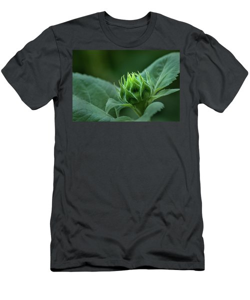 Sunflower Bud Men's T-Shirt (Athletic Fit)