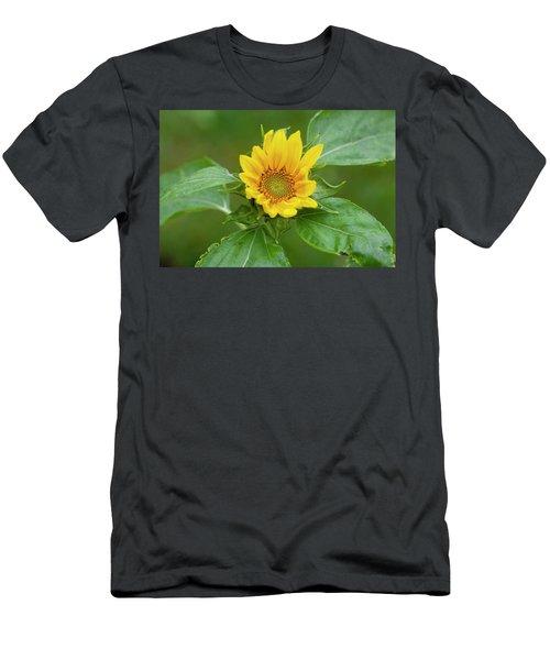 Sunflowers Helianthus 002 Men's T-Shirt (Athletic Fit)