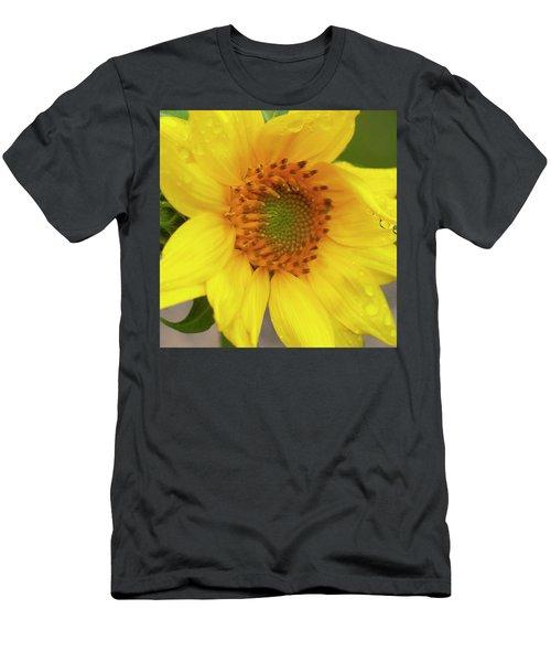 Sunflowers Helianthus 006 Men's T-Shirt (Athletic Fit)
