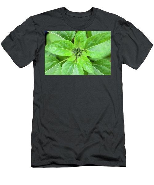 Sunflowers Helianthus 012 Men's T-Shirt (Athletic Fit)