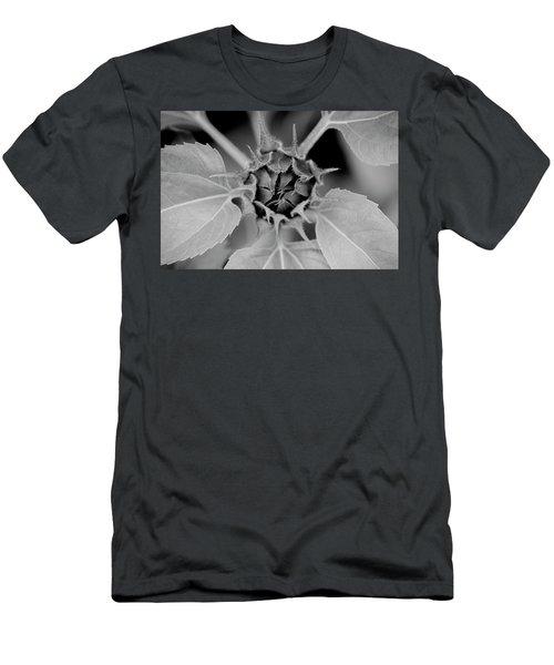 Sunflowers  Helianthus 023 Men's T-Shirt (Athletic Fit)