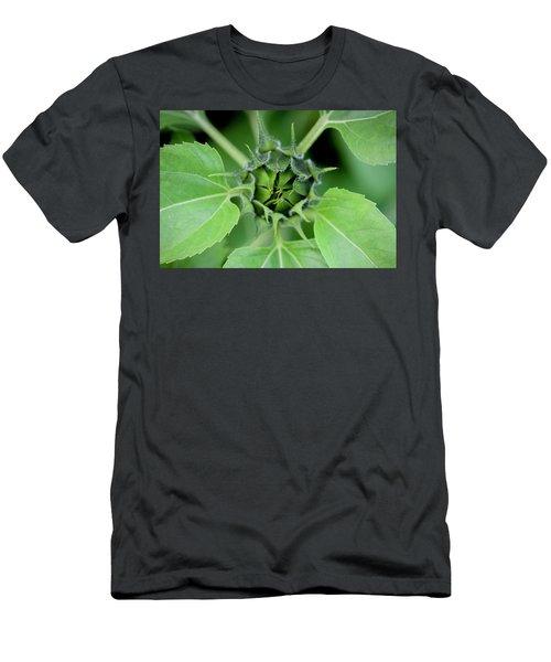 Sunflowers  Helianthus 024 Men's T-Shirt (Athletic Fit)