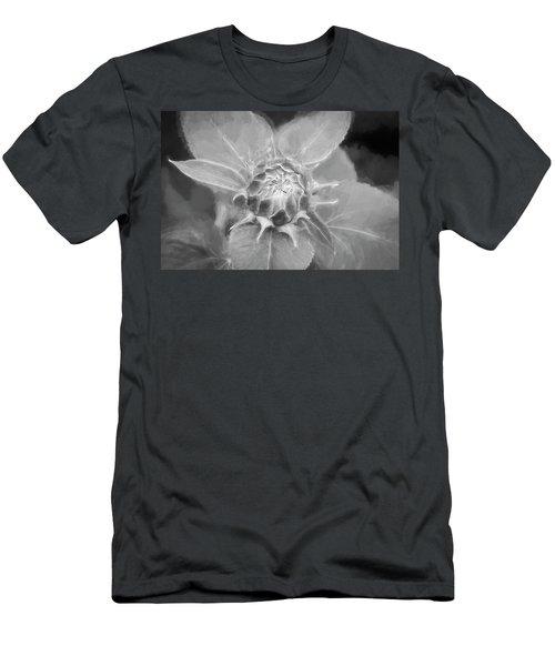Sunflowers  Helianthus 041 Men's T-Shirt (Athletic Fit)