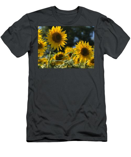 Sweet Sunflowers Men's T-Shirt (Athletic Fit)