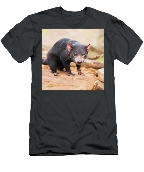 Tasmanian Devil In Hobart, Tasmania Men's T-Shirt (Athletic Fit)