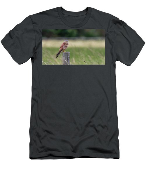 The Male Kestrel On His Watch Men's T-Shirt (Athletic Fit)