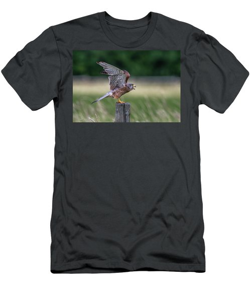 The Male Kestrel On His Way Men's T-Shirt (Athletic Fit)
