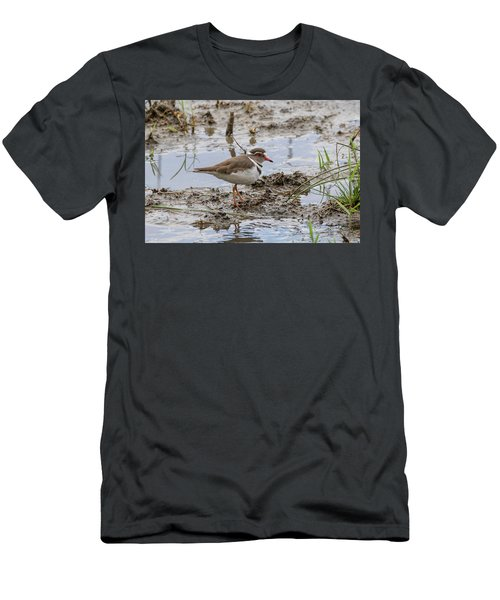 Three-banded Plover Men's T-Shirt (Athletic Fit)