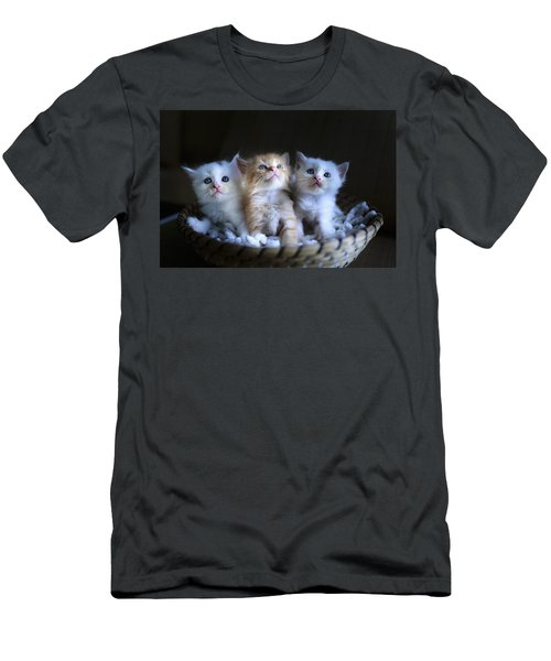 Three Little Kitties Men's T-Shirt (Athletic Fit)