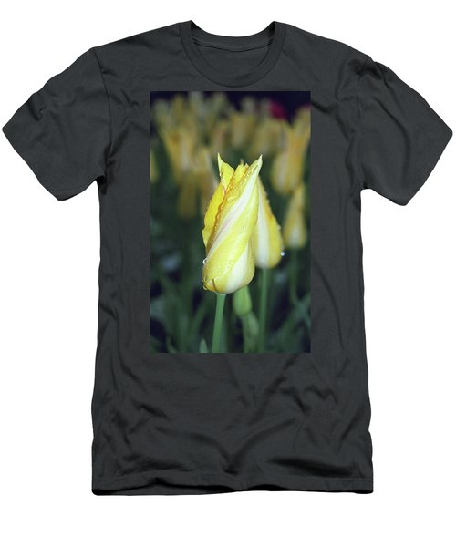 Twisted Yellow Tulip Men's T-Shirt (Athletic Fit)