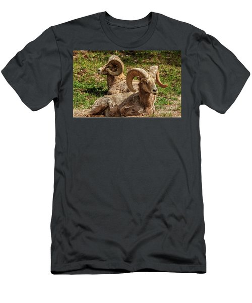 Two Resting Bighorn Sheep Men's T-Shirt (Athletic Fit)
