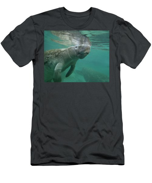 West Indian Manatee, Crystal River Men's T-Shirt (Athletic Fit)