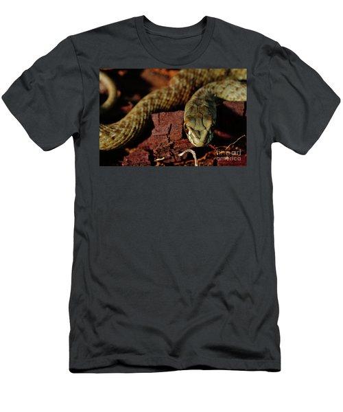 Wild Snake Malpolon Monspessulanus In A Tree Trunk Men's T-Shirt (Athletic Fit)