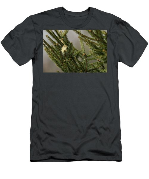 Willow Warbler Men's T-Shirt (Athletic Fit)
