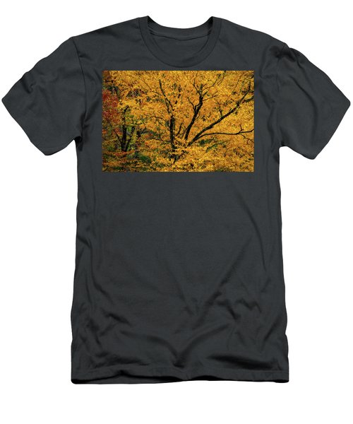 Yellow Tree Leaf Brilliance  Men's T-Shirt (Athletic Fit)