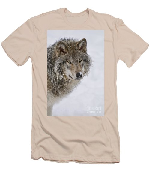 Timber Wolf Pictures Men's T-Shirt (Slim Fit) by Wolves Only