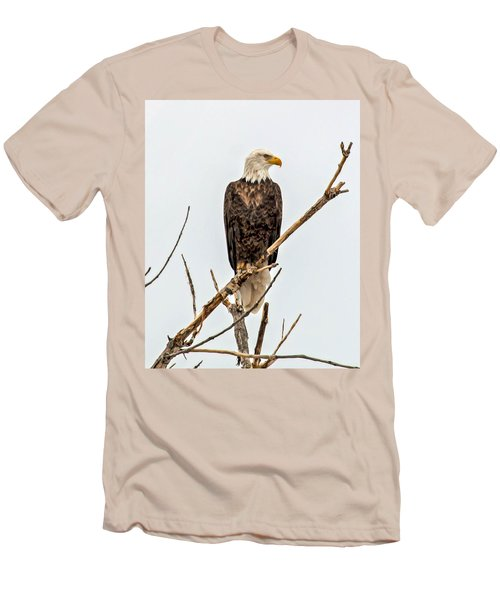 Bald Eagle On A Branch Men's T-Shirt (Athletic Fit)