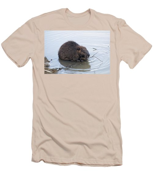 Beaver Chewing On Twig Men's T-Shirt (Slim Fit) by Chris Flees