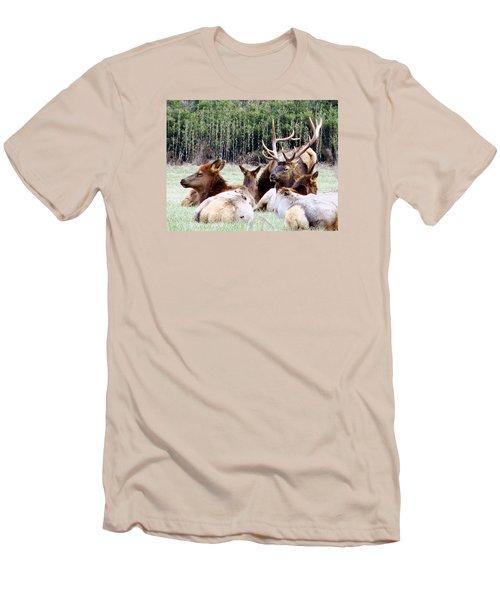 Bull Elk And His Girls 2 Men's T-Shirt (Athletic Fit)