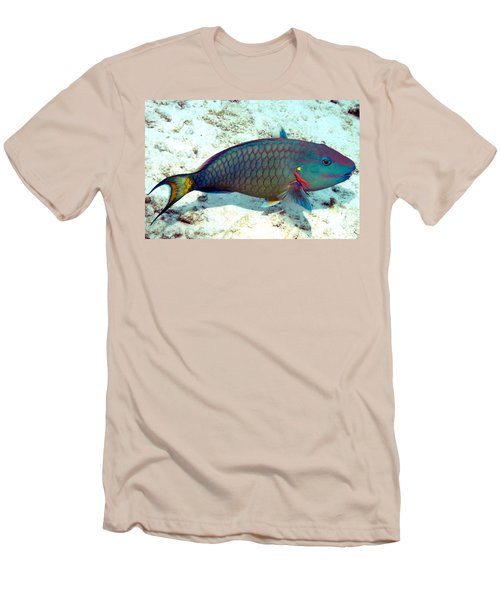 Caribbean Stoplight Parrot Fish In Rainbow Colors Men's T-Shirt (Slim Fit) by Amy McDaniel